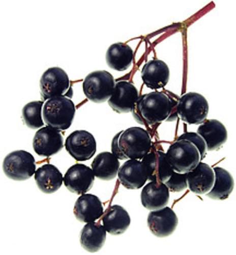 USDA Elderberries - 1 c