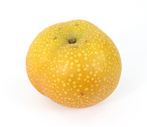 USDA  asian Pears - 1