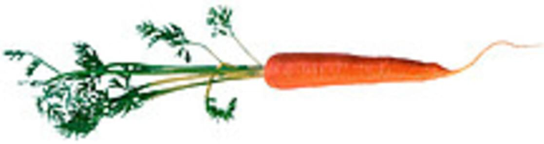 USDA Carrots