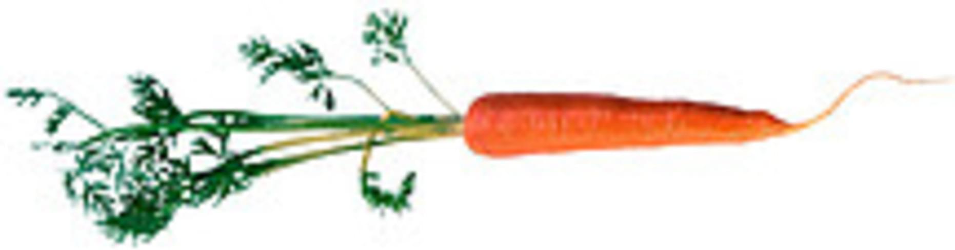 USDA Carrots - 1