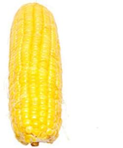 USDA Corn  sweet  yellow