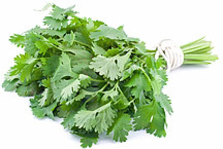 USDA Parsley - 1
