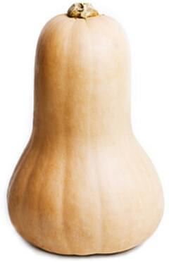 USDA Squash  winter  butternut