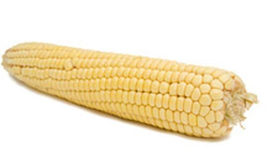 USDA Corn  sweet  white