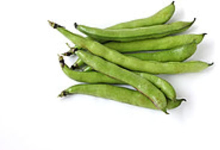 USDA  mature seeds Broadbeans (fava beans) - 1 c