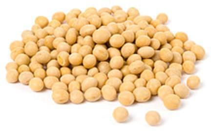 USDA Soybeans  mature seeds