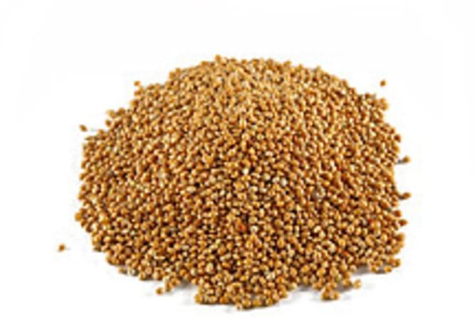 USDA Millet - 1 c
