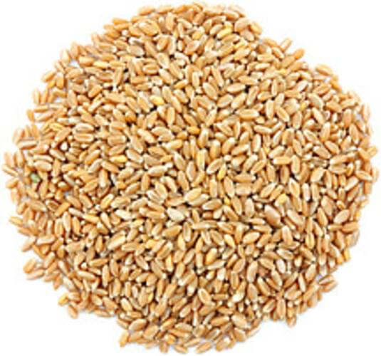USDA Wheat - 1 c