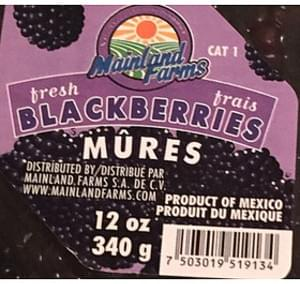 Mainland Fresh Blackberries
